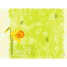 Duni Dunicel Spring Flowers placemat 30x40 cm dessin Productfoto