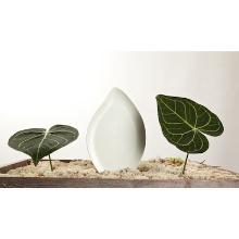 Osme Organic Amenities tray leaf shaped Productfoto